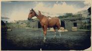 Kentucky Saddler Fuchs-Pinto 2
