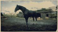 Kentucky Saddler Rappe 2