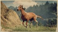 Kentucky Saddler Fuchs-Pinto 1