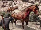 Totes Pferd