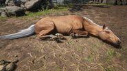 Pferd beim Schlafen