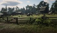 Red Dead Redemption 2 20181111143345