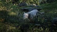 Puma (Spiel)