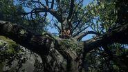 König Joe's Baum