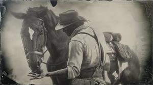 Pferde Verbundenheit