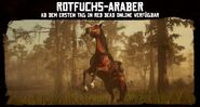 Rotfuchs-Araber2
