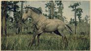Mustang Mausfalbe 1