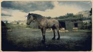 Mustang Tigerstreifen-Brauner 2
