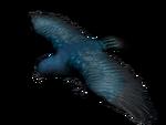 Singvogel3D