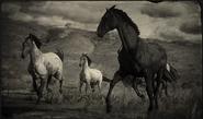 Pferde (Kompendium)