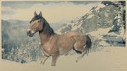 Mustang Wildtyp-Brauner 1