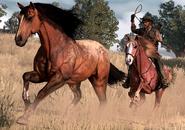 John jagt Wildpferd