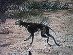 Zombie Kojote