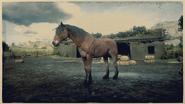 Mustang Wildtyp-Brauner 2