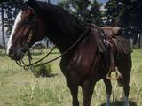 Rachel (Pferd)