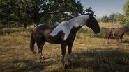RDR2 American Paint Tobiano