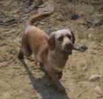 Rufus-RDRII