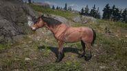 Mustang Brauner 3