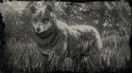 Timberwolf Profil