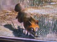 Fuchs1