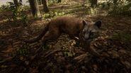 Florida-Panther (Spiel)