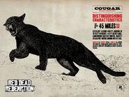 Cougar11