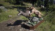 Puma und Hirsch