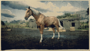 American Standardbred Isabell-Windfarben 2