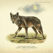 RDRII-Kojote