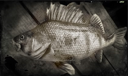 Fische (Kompendium)