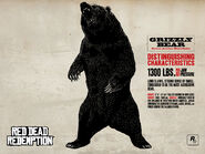 Grizzly Bear11
