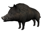 Wilbur3D