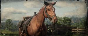 Pferd in Red Dead Online