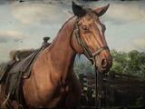 Pferde in Redemption 2