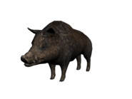 Wildschwein3D