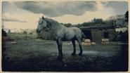 Mustang Mausfalbe 2