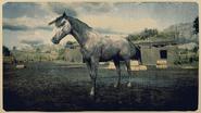 Andalusier Rosenschimmel 1