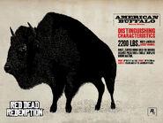American Buffalo1