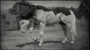 Pferde (Spielfortschritt)