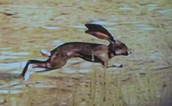 Kaninchen Flucht