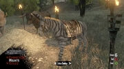 Zebra Esel Multtiplayer