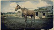 Kentucky Saddler Windfarbener Brauner 2