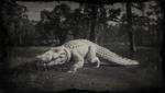 Legendärer Riesenalligator Profil
