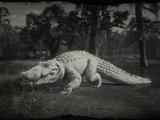 Legendärer Riesenalligator