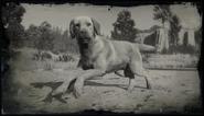 Rufus Kompendium