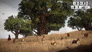 Hirsche und Rehe