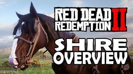 Red Dead Redemption 2 Horses - Shire Overview