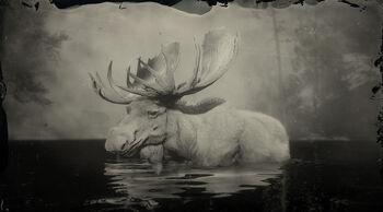 Best option for legendary moose pelt