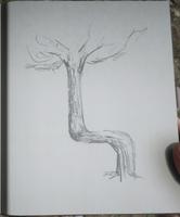 RDR2 POI 37 Trail Trees (I) 02