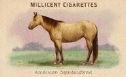 Horses Card American Standardbred